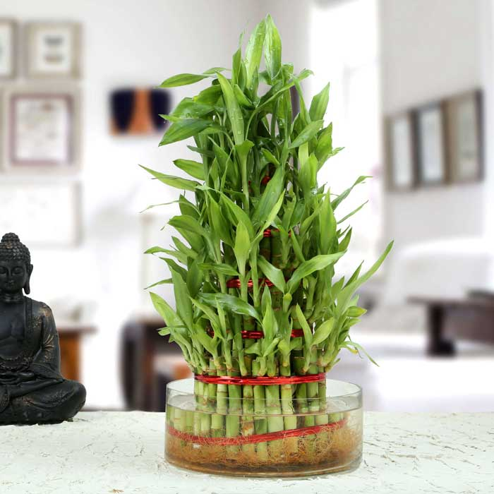 Gambar bambu rejeki