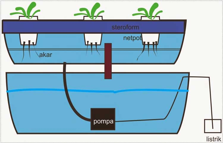 Hidroponik floating raft