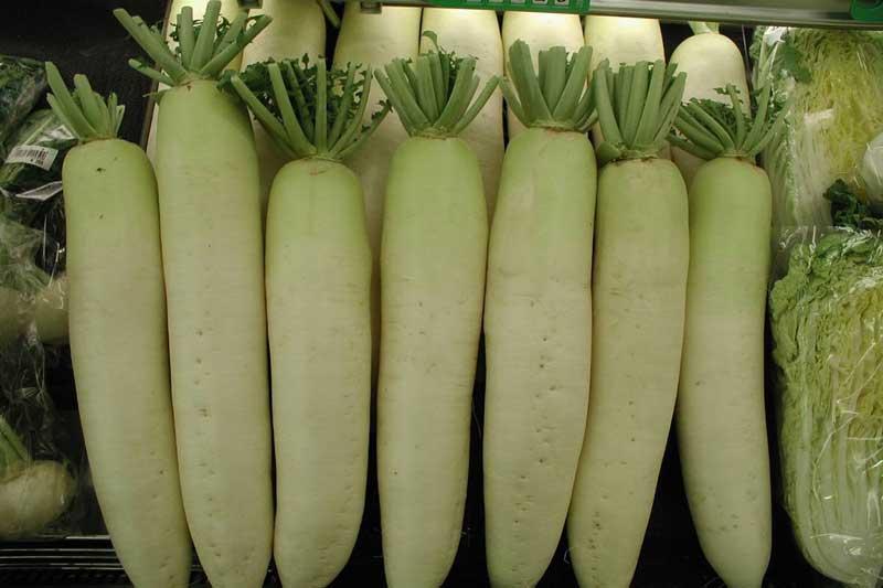 sayur lobak putih segar
