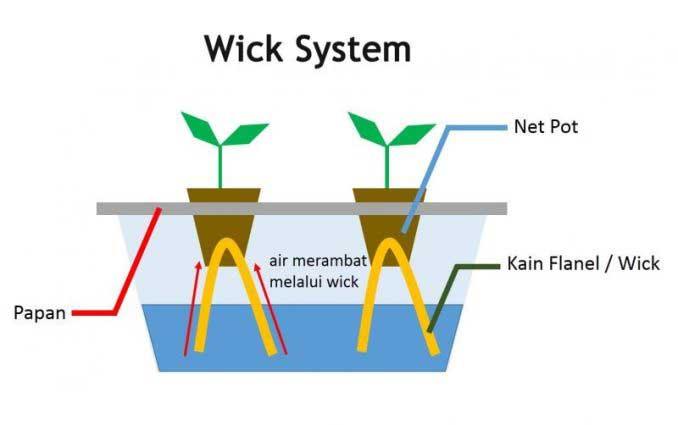 Teknik menanam hidroponik