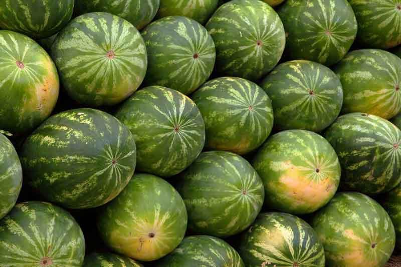 Jual buah semangka